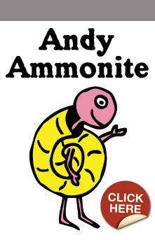 Andy Ammonite
